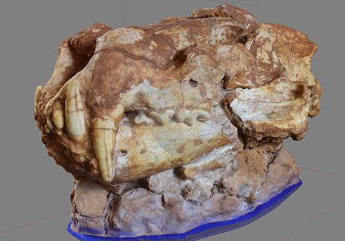 Photomodélisation archéologique, crâne du lion des cavernes de Château